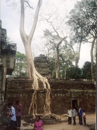 Taphrom templet med træer