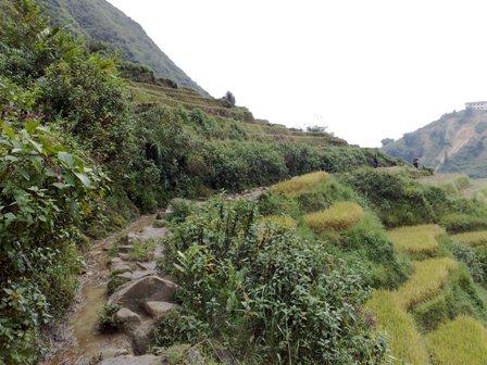 Stien gennem rismarkerne